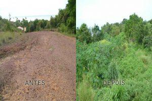 recuperacao-de-areas-com-planta-nativas